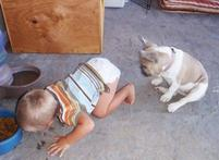Funny toddler pictures eating dog food next to a dog.JPG