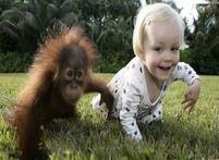 Baby and animals funny pictures of baby orangutan and baby crawling on the grass.JPG