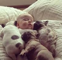 Dogs sleeping together with baby such a cute pciture.JPG