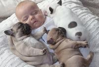 baby and puppies french bulldogs.JPG