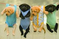 Puppies on hanging rope.JPG