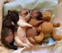 Super funny and cute puppies photo hugging their teddy bear.JPG