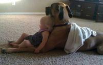 Cute funny baby and dog picture of the two watching TV together