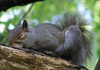 Sleeping squirrel photos with its tail sticking up