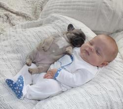 Cute and funny Baby and French Bulldog Puppies Photo