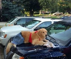 Dog car washing car