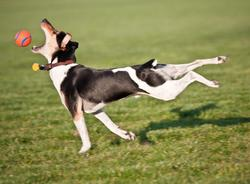 Funny dog fetching picture