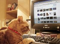 Funny picture of a cat next to keyboard.jpg