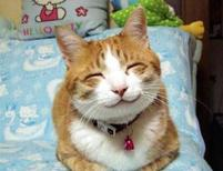 Funny picture of a cat smiling in Japan.jpg