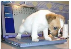 Funny puppy photo peeing on a laptop.JPG