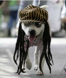 A dog dressed as a Rastafarian participates in the Family Pet Festival in California 2009.PNG