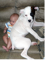 Funny dog photo with baby.PNG
