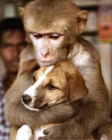 Funny animals picture with monkey holding a dog tightly.PNG