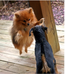 Funny fighting dogs.PNG