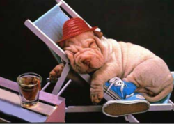 Funny pup picture in deep sleep on a beach chair.PNG