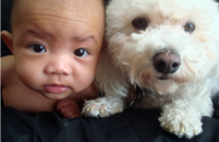 Cute Baby and Bichon Frise Puppy very closed together.PNG