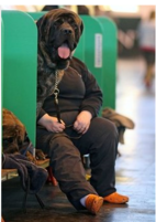 An owner sits alongside a dog taking part in Britain's annual Crufts dog show in England.PNG