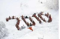 Swimming club meembers form a 2010 sign in the snow as they celebrate the coming of the new year in Russia.PNG