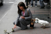White duck stealing money from a lady's purse.PNG