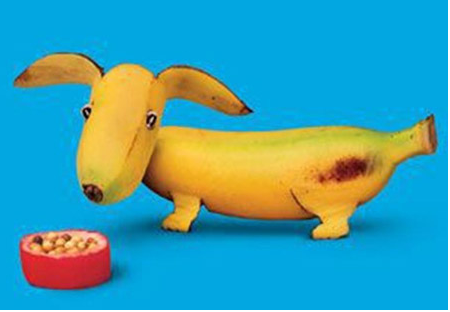 Fruits picture of a banana dog shaped.PNG
