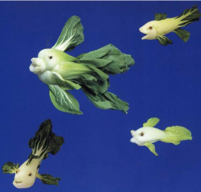 Funny vegetables picture of fish made with bokchoy.PNG