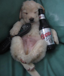 Drunken puppy holding a remote control and a beer.PNG