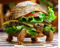 Burger turtle picture.PNG