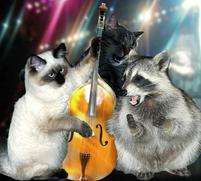 Two cats and a raccoon in concert.jpg