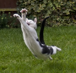 Funny cat images jumping in the air.PNG