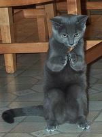 Black cat stands on hind legs to eat.jpg