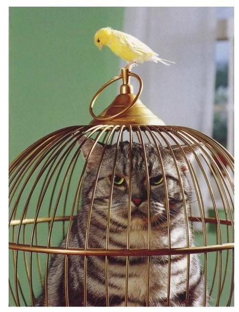 Cat and bird switch places.jpg
