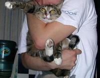 Cat being hugged or is it being choked.jpg