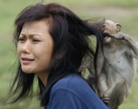 Human monkey funny pictures_a small monkey bitting a woman's hair.PNG