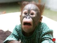 A baby monkey looks shocked.jpg