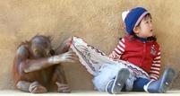 A baby orangutan pulls on the skirt of a little girl.jpg