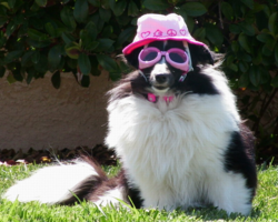 Dog funny photos_dog standing on grass and wearing a pink hat.PNG