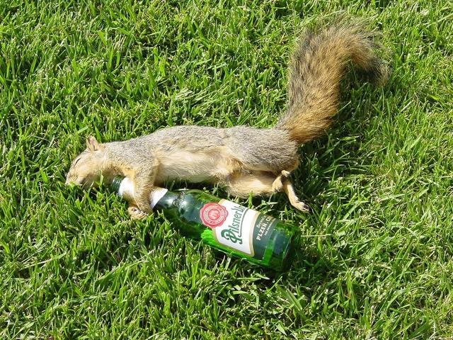 Drunk squirrel is passed out.jpg