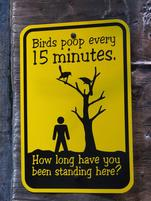 Funny sign that warns about bird poop.jpg