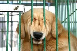 Dog makes a funny face while pressing it against the cage.jpg