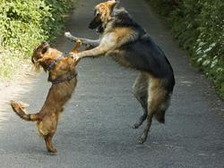 Funny photo of two dogs dancing.jpg