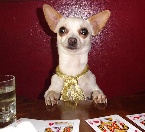 Pic of a funny looking Chiuaua with a gold necklace in front of poker cards.jpg