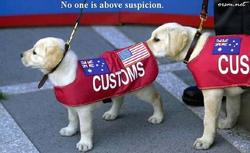 Funny pic of a customs inspection dog sniffing another's rear area.jpg