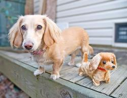 Funny picture of a wiener dog and its buddy.jpg