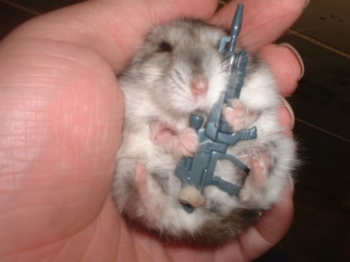 Funny hamster armed and dangerous.jpg