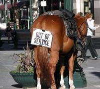 Funny photo of a horse with an Out of Service sign attached.jpg