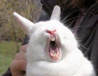 Bunny rabbit makes a funny face.jpg
