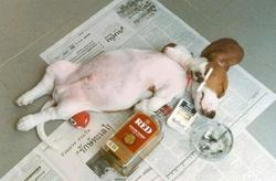 Funny photo of a dog passed out from too much booze and cigarettes.jpg