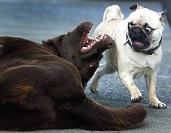 Two dogs with funny expressions interact with one another.jpg