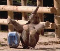 Funny pic of a baby elephant falling on the ground.jpg