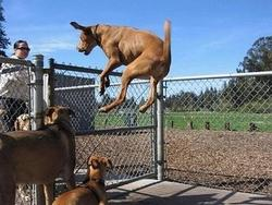 Funny picture of an excited dog jumping in the air.jpg